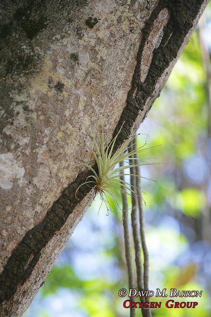 Ant Trail On Tree Bark