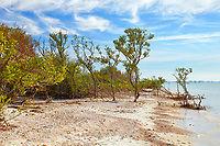 Scenic view along the beach at Honeymoon Island State Park during a winter afternoon