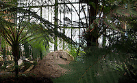 Plant History Glasshouse (formerly Australian Glasshouse), 1830s, Rohault de Fleury, Jardin des Plantes, Museum National d'Histoire Naturelle, Paris, France. Low angle view of cyatheales in the glasshouse.