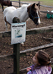 """Jenna Jenkins, age 3, of Levittown, reads the """"warning sign"""" advising that the pony """"Bullseye"""" (at rear) suffers from diabetes at the Stolz Farm in Hicksville on Thursday October 20, 2005. (Newsday Photo / Jim Peppler)."""