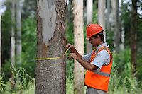 "URUGUAY Rivera , FSC Eukalyptus Forst der Firma Urufor fuer Holz , Zellulose sowie Biomasse Nutzung  | .URUGUAY  Rivera , FSC eucalyptus forest of company Urufor for timber , pulp and biomass use  .| [ copyright (c) Joerg Boethling / agenda , Veroeffentlichung nur gegen Honorar und Belegexemplar an / publication only with royalties and copy to:  agenda PG   Rothestr. 66   Germany D-22765 Hamburg   ph. ++49 40 391 907 14   e-mail: boethling@agenda-fototext.de   www.agenda-fototext.de   Bank: Hamburger Sparkasse  BLZ 200 505 50  Kto. 1281 120 178   IBAN: DE96 2005 0550 1281 1201 78   BIC: ""HASPDEHH"" ,  WEITERE MOTIVE ZU DIESEM THEMA SIND VORHANDEN!! MORE PICTURES ON THIS SUBJECT AVAILABLE!! ] [#0,26,121#]"