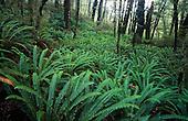Ladder ferns along the Kepler track, Fiordland National Park, South Island, New Zealand.