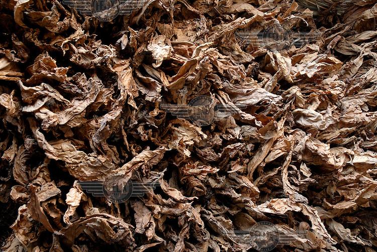 Dried tabacco.