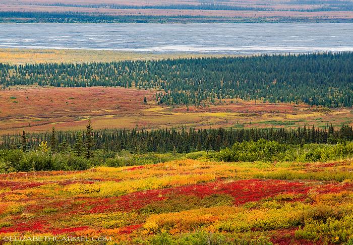 Crimson Tundra