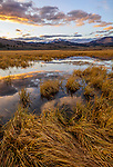 Yellowstone National Park, WY: Sunset light on still waters and grasses of Swan Lake Flats with Electric Peak in the distance