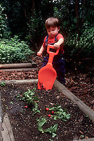Very small boy child with very big red garden shovel, digging radishes vegetables in raised beds, liitle and big comparison, gardening