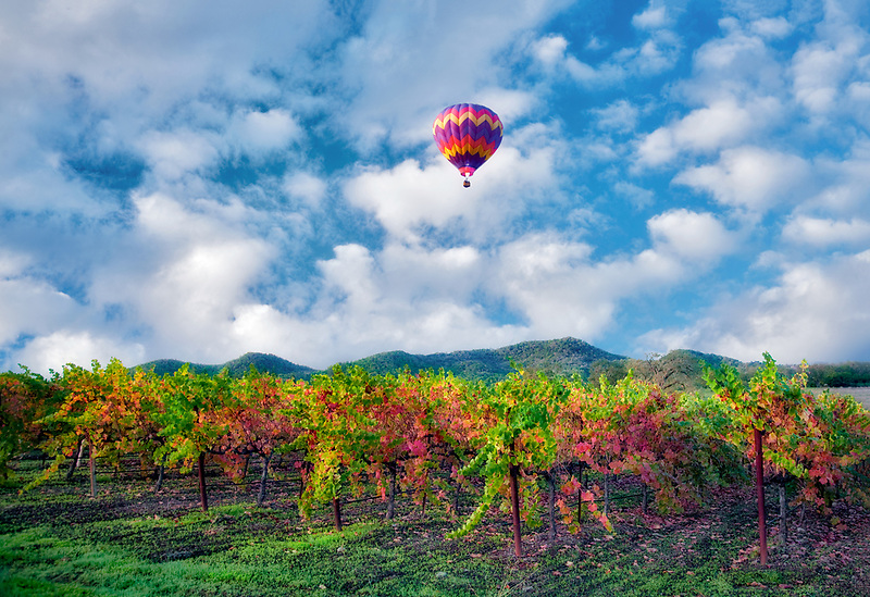 Hot air balloons over fall colored vineyards. Napa Valley, California