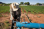 """June 16, 2008 -- COLORADO CITY, AZ: JOSEPH JESSOP, 86 years old, works on a water filter that irrigates the community corn field in Colorado City, AZ. Jessop, a polygamist and member of the FLDS, was arrested during the Short Creek Raid in 1953 and had his wives and children taken from him for two years. Colorado City and neighboring town of Hildale, UT, are home to the Fundamentalist Church of Jesus Christ of Latter Day Saints (FLDS) which split from the mainstream Church of Jesus Christ of Latter Day Saints (Mormons) after the Mormons banned plural marriage (polygamy) in 1890 so that Utah could gain statehood into the United States. The FLDS Prophet (leader), Warren Jeffs, has been convicted in Utah of """"rape as an accomplice"""" for arranging the marriage of teenage girl to her cousin and is currently on trial for similar, those less serious, charges in Arizona. After Texas child protection authorities raided the Yearning for Zion Ranch, (the FLDS compound in Eldorado, TX) many members of the FLDS community in Colorado City/Hildale fear either Arizona or Utah authorities could raid their homes in the same way. Older members of the community still remember the Short Creek Raid of 1953 when Arizona authorities using National Guard troops, raided the community, arresting the men and placing women and children in """"protective"""" custody. After two years in foster care, the women and children returned to their homes. After the raid, the FLDS Church eliminated any connection to the """"Short Creek raid"""" by renaming their town Colorado City in Arizona and Hildale in Utah.  Photo by Jack Kurtz / ZUMA Press"""