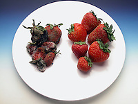 IRRADIATION OF STRAWBERRIES<br />