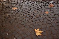 Foglia sulla strada di sanpietrini. Leaf tree on a road sanpietrini..