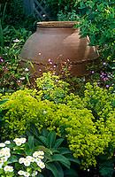 Alchemilla mollis (Lady's Mantle) surrounds a large antique oil jar