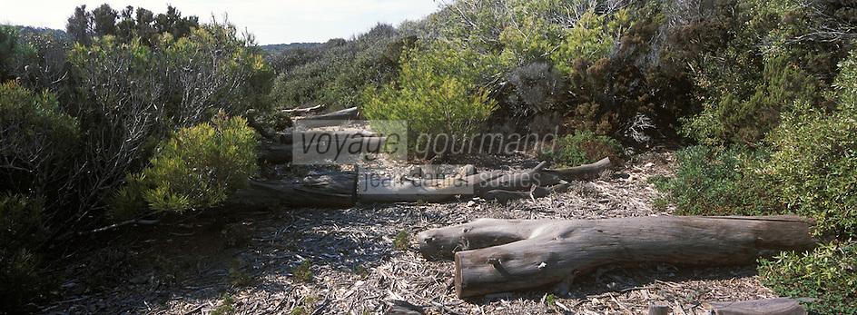 Europe/Provence-Alpes-Côte d'Azur/83/Var/Iles d'hyères/Ile de Porquerolles: Troncs de pins près de la calanque de l'Indienne
