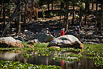 Family on the shore of Cub Lake, Rocky Mountains, landscape, yellow pondlilies, lily pads, Rocky Mountain National Park, spring, Colorado, USA, visitor, outdoors, not released, editorial only.