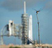 A dragonfly is seen near the SpaceX Falcon 9 rocket, with the Dragon spacecraft onboard, at Launch Complex 39A at NASA's Kennedy Space Center in Cape Canaveral, Florida, Thursday, June 1, 2017. Dragon is carrying almost 6,000 pounds of science research, crew supplies and hardware to the International Space Station in support of the Expedition 52 and 53 crew members. The unpressurized trunk of the spacecraft also will transport solar panels, tools for Earth-observation and equipment to study neutron stars. This will be the 100th launch, and sixth SpaceX launch, from this pad. Previous launches include 11 Apollo flights, the launch of the unmanned Skylab in 1973, 82 shuttle flights and five SpaceX launches. <br /> Mandatory Credit: Bill Ingalls / NASA via CNP