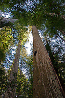 A beautiful day in the fall at Humbolt Redwood State Park, California.