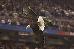 Challenger, an American who represents the American Eagle Foundation flys over fans during the National Anthem during the Fiesta Bowl at the University of Phoenix Stadium in Glendale, Az. Photo by Jaime Valdez