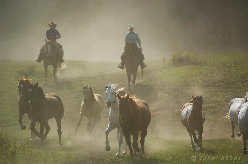 Horses Running-Montana