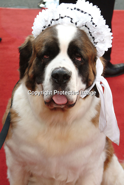 &quot;Nana&quot; the dog<br />&quot;Peter Pan&quot; - Los Angeles Premiere<br />Grauman's Chinese Theatre<br />Hollywood, CA, USA <br />Saturday, December 13, 2003<br />Photo By Celebrityvibe.com/Photovibe.com