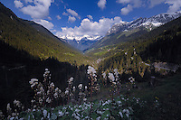 View of forests and mountains on the Hahtennjoch pass between Imst and Elmen, Reutte district. The Tyrol, Tirol. Austria.