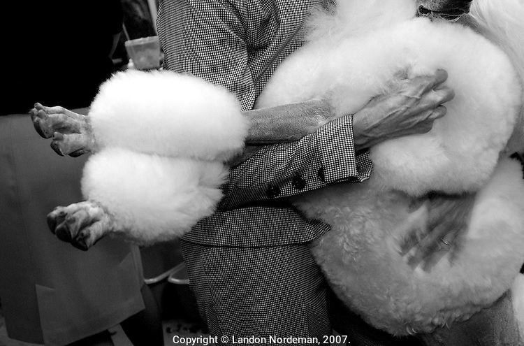 """NEW YORK - FEB 9:  Owner Karen LeFrak clutches her standard poodle named """"Champion Ale Kai Mikimoto On Fifth"""" known as """"Miki"""" after she won Best of Breed and Best of the Non-Sporting Group at the 128th Annual Westminster Kennel Club Dog Show at Madison Square Garden in New York City on Tuesday February 10, 2004. (Photo By Landon Nordeman)"""