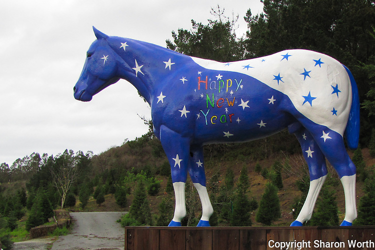 "The horse statue at Lemo's Farm in Half Moon Bay, California, greets passerby with a colorful ""Happy New Year"" on New Year's Day, 2011."