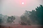 Early morning sunrise and mist, Bandhavgarh National Park.India....