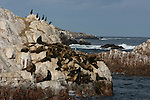 CA sea lions and cormorants, Isla Todos Santos, Baja California