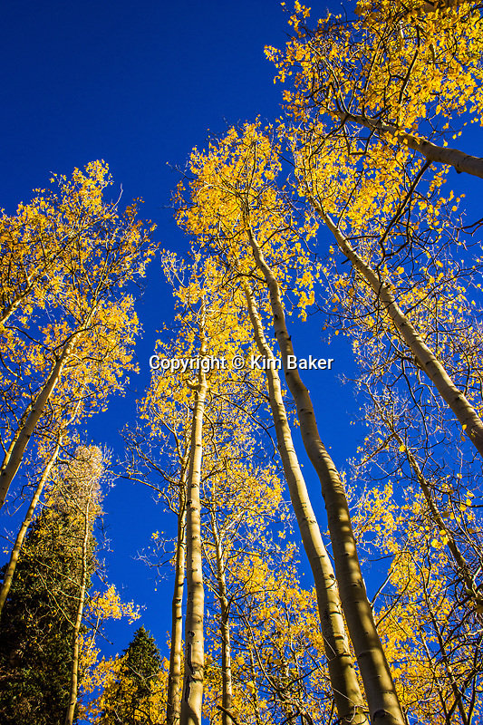 Telluride, CO Fall Aspen Colors