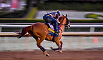 October 28, 2019 : Breeders' Cup Distaff entrant Blue Prize, trained by Ignacio Correas, exercises in preparation for the Breeders' Cup World Championships at Santa Anita Park in Arcadia, California on October 28, 2019. Scott Serio/Eclipse Sportswire/Breeders' Cup/CSM