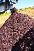 Grape skins and pips after pressing red grapes, Herdade Sao Miguel, Alentejo, Portugal herdade de sao miguel alentejo portugal