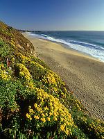 Wildflowers along the Big Sur Coast, California.