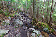 A muddy section of the Mt Tecumseh Trail, just below the first viewpoint, in the New Hampshire White Mountains in the spring of 2019 that is in desperate need of drainage work.
