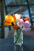 Overblown cut tulips in a glass jar