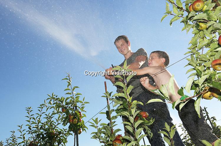 Foto: VidiPhoto<br /> <br /> DODEWAARD - Om te voorkomen dat appels letterlijk verbranden en beginnen te koken aan de bomen, gaat bij fruitteler Thomas de Vree uit Dodewaard dezer dagen de beregeningsinstallatie aan. Felle zon, tropische temperaturen en nauwelijks wind is funest voor de appels zo vlak voor de oogst. De temperatuur van de vrucht kan dan oplopen tot 60 graden Celsius en dat is funest. Vooral de donker gekleurde rassen als Wellant , Elstar en Jonagold zijn zeer gevoelig voor zonnebrand. Fruittelers verwachten een topoogst dit jaar en alleen het weer kan nog roet in het eten gooien. De Vree doet er dan ook alles aan om dat te voorkomen. De pompinstallatie draait bij deze temperaturen zo'n 5 uur per dag. Door de flinke regenval van de afgelopen weken is er voldoende watervoorraad in de sloten voor de 7,5 ha fruit van de teler uit Dodewaard. Tegelijkertijd draaien ook de druppelaars onder de bomen op volle toeren om voor voldoende vocht te zorgen, zo'n 3 mm per uur. De Vree gebruikt op dit moment zo'n 1000 kuub regenwater per dag. Foto: Het afstellen van de beregeningsinstallatie door de zoons van Thomas de Vree.