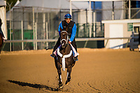 LOUISVILLE, KY - MAY 01: Take Charge Brandi gallops in preparation for the Kentucky Oaks at Churchill Downs on May 1, 2018 in Louisville, Kentucky. (Photo by Alex Evers/Eclipse Sportswire/Getty Images)