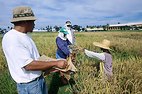 PHILIPPINES, IRRI international rice research institute est. by Ford and Rockefeller Foundation in Los Banos near Manila , development of high yield hybrids and Golden Rice, a GMO crop with vitamin A betacarotin, scientist, vitamin A deficiency mostly affects women and children – causing sickness, blindness, and even death / PHILIPPINEN, IRRI, Internationales Reisforschungsinstitut in Los Banos, Entwicklung von Hochertragshybridsorten und Genmanipuliertem Reis mit eingesetztem Vitamin A und Betacarotin, auch Goldener Reis genannt