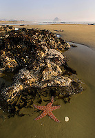 A starfish sits in a tide pool at Morro Stand State Beach, Morro Bay CA