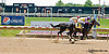 Centripetal Motion winning at Delaware Park on 6/5/13