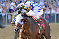 Alternation (no. 8), ridden by Luis Quinonez and trained by Donnie Von Hemel, wins the grade 3 Pimlico Special Stakes for three year olds and upward on May 18, 2012 at Pimlico Race Course in Baltimore, Maryland  (Bob Mayberger/Eclipse Sportswire)