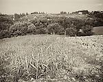 Landscape, Renai