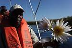A guide holds up two Okavango Delta water lilies. The people of the delta used to make necklaces out of these lilies for young brides.