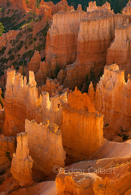 Wall Street, Bryce Canyon National Park, Utah