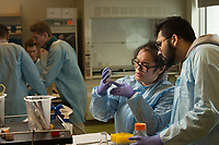 Ashley Widmer shows Sager Patel the progress of the bacteria cultures the two prepared during Microbial Biology Experiential Learning Lab (MBIO A342) in UAA's ConocoPhillips Integrated Science Building.
