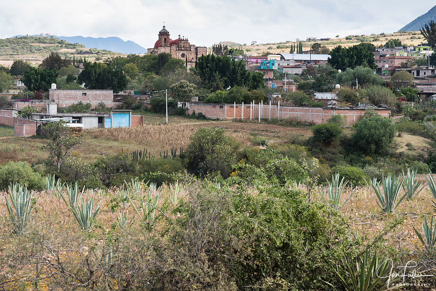 The town of San Marcos Tlapazola across a field of espadin maguey plants.