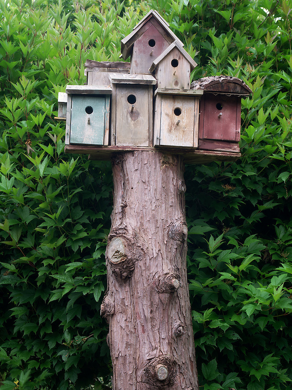 Bird houses. The Oregon Garden. Silverton, Oregon