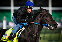 LOUISVILLE, KY - MAY 03: Untrapped gallops in preparation for the Kentucky Derby at Churchill Downs on May 03, 2017 in Louisville, Kentucky. (Photo by Alex Evers/Eclipse Sportswire/Getty Images)