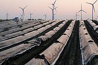GERMANY, Plauerhagen, asparagus field and Eno wind turbines / DEUTSCHLAND, Plauerhagen, Spargelfeld und Windpark der Mannheimer Stadtwerke MVV mit ENO Windkraftanlagen