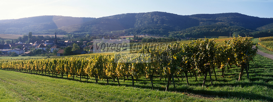 Europe/France/Alsace/67/Bas-Rhin/Cleebourg : Vignoble et village