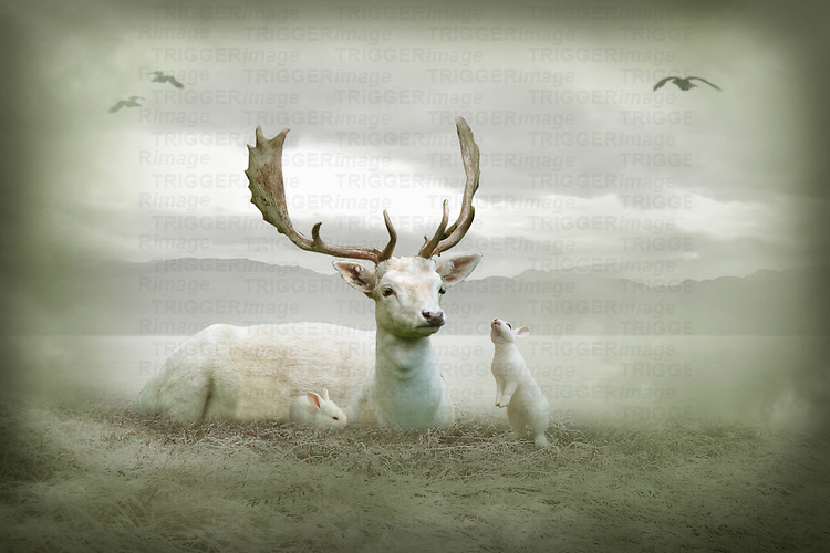 White stag sitting with white rabbits