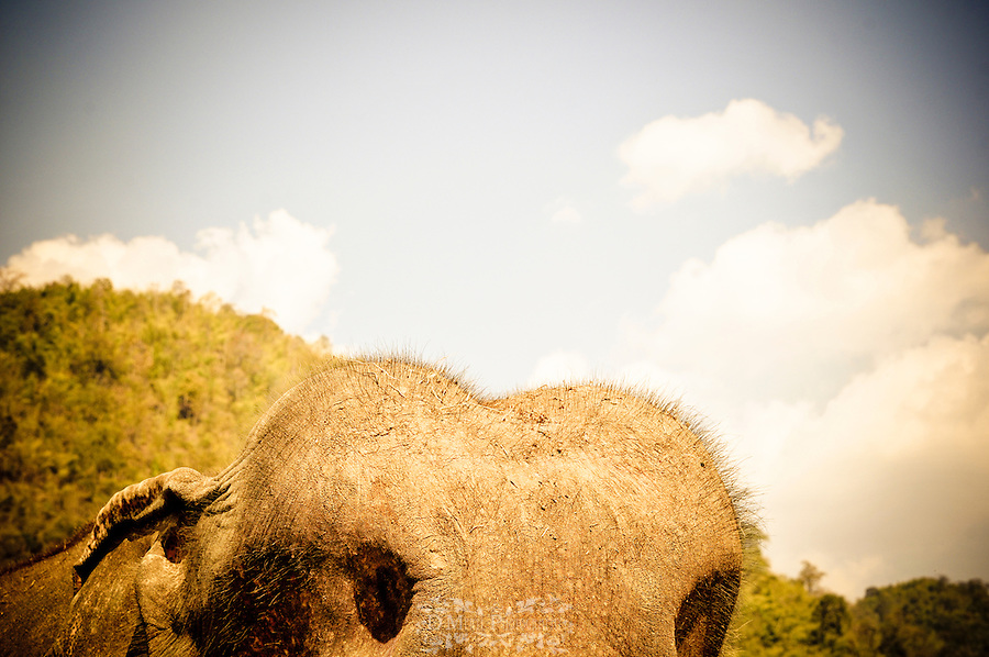 thailand, elephant, nature reserve, park, endangered, protection, creative, animal, landscape, head, humps, abstract, sky, illusion